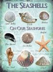 Seashells Metal Sign on our Seashores Vintage Retro Plaque Sign